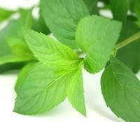 where to buy peppermint oil